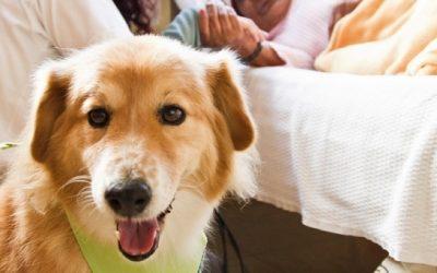 PL que autoriza a entrada de animais de estimação para visita em hospitais é apresentado por Padilha