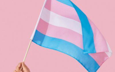 Padilha apresenta PL que visa criar vagas de trabalho para travestis e transexuais